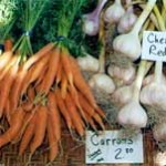 A bunch of carrots and garlic