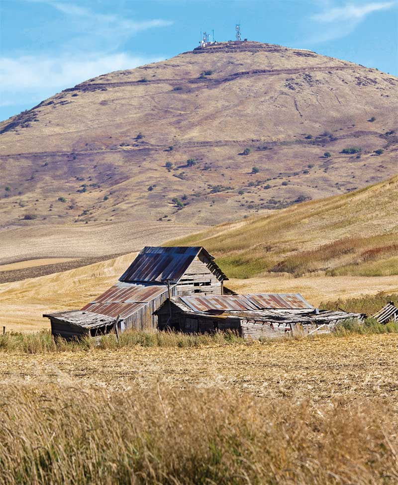 An ancient barn in front of Steptoe Butte.