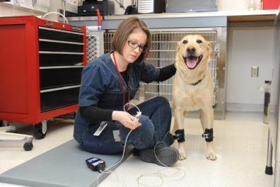Tania Perez with Carlee, a yellow lab