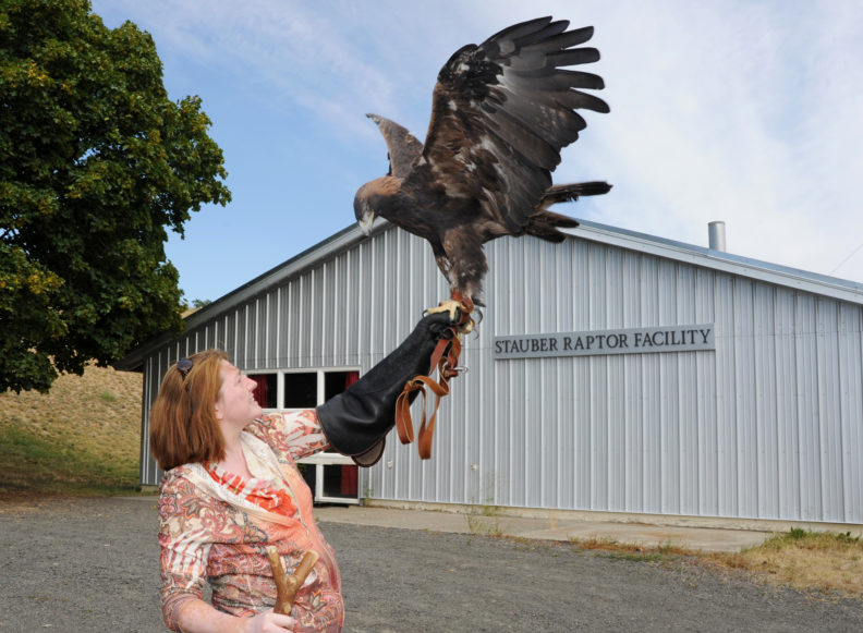WSU wildlife veterinarian Nicky Finch with Amicus, a blind Golden Eagle