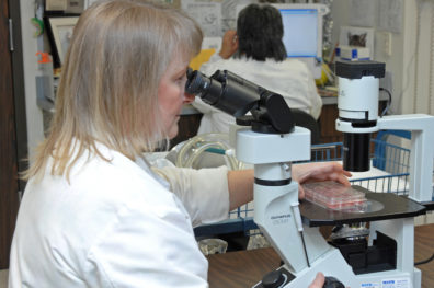 Washington Animal Disease Diagnostic Laboratory employee looking through a microscope