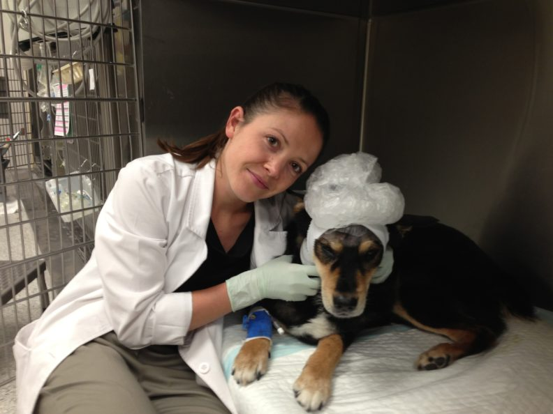Beryl Swanson veterinary student with Mr. Bear