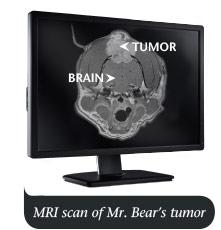 MRI scan of Mr. Bear's brain tumor
