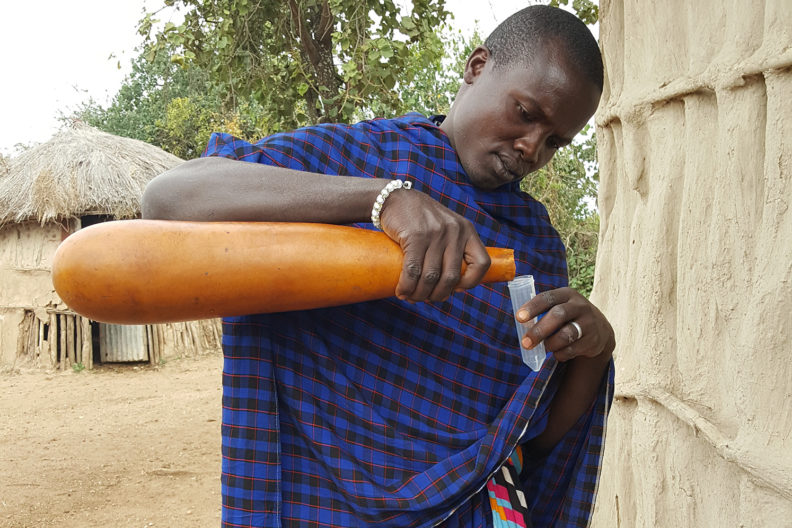 Maasai man in Tanzania pouring milk from calabash gourd