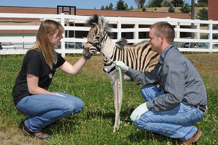 Holly Sawyer and Geoffrey McGee with baby zebra