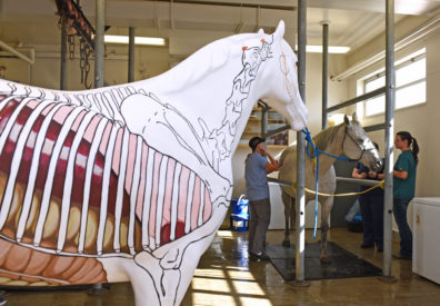 Painted horse and students examining a live horse.