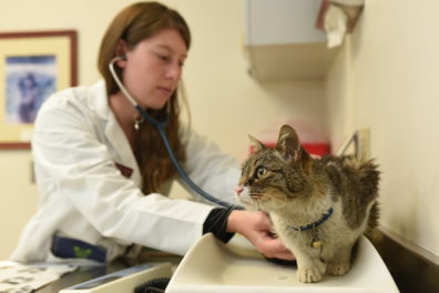 A veterinary student listens to Thomas's heartbeat