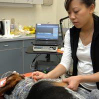 Dr. Chen using the electrodiagnostics machine on a dog patient