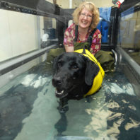 Black lab with yellow vest in the treadmill with Lori Lutskas