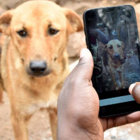 A person is looking at a dog's face through a cell phone.