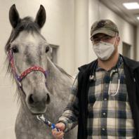 Cord Kivi is walking a horse in the WSU Veterinary Hospital