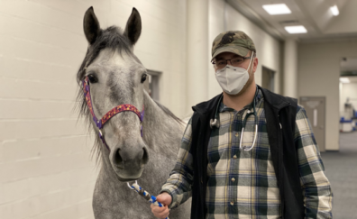 Cord Kivi is walking a horse in the WSU Veterinary Hospital