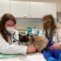Dr. Janean Fidel, veterinary oncologist, and Margaret Wong, a fourth-year student, exam Abby prior to her undergoing a second round of chemotherapy.