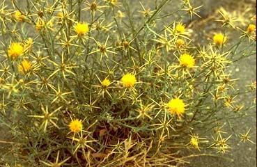 Selected Poisonous Plants Of The Pacific Northwest Animal
