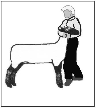 Training, Grooming and Showing Market Lambs | Animal Agriculture