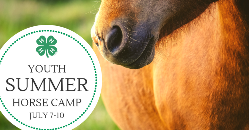 4-H Clover Youth Summer Horse Camp July 7-10