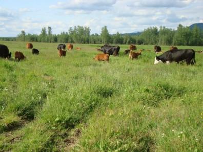 west valley beef