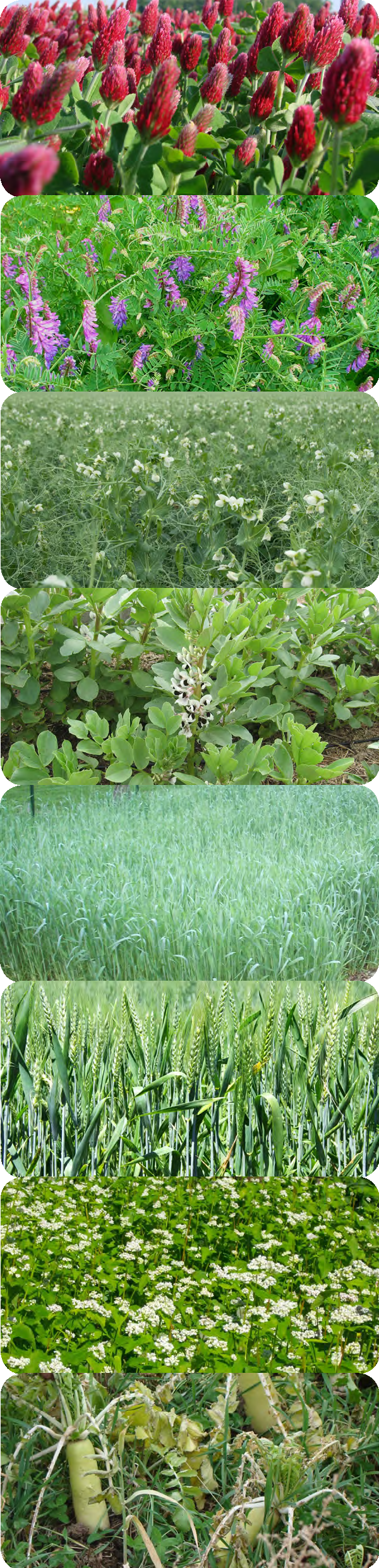 covercrop pictures