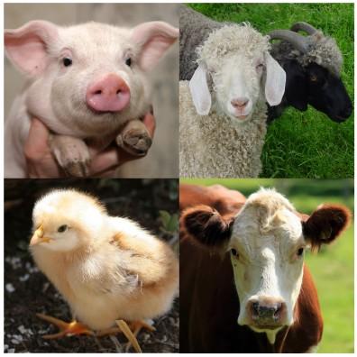 livestock-four
