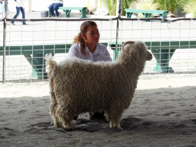 Jaycey Wreggelsworth & fiber goat, 2013