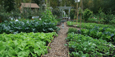 food garden with raised beds and wood chip pathways