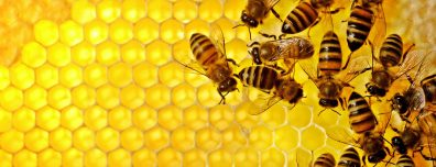Bees on illuminated honeycomb