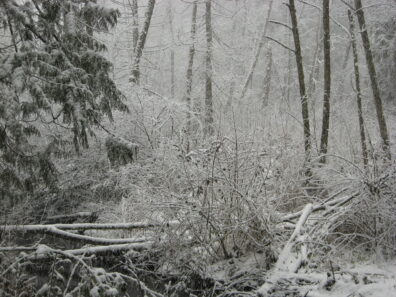 A winter forest scene, covered in snow