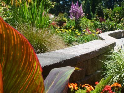 A raised garden bed with a cement retaining wall borders a cement path with purple,red, green, yellow and orange plants.