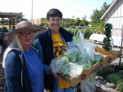 MGs harvest produce for Food Bank