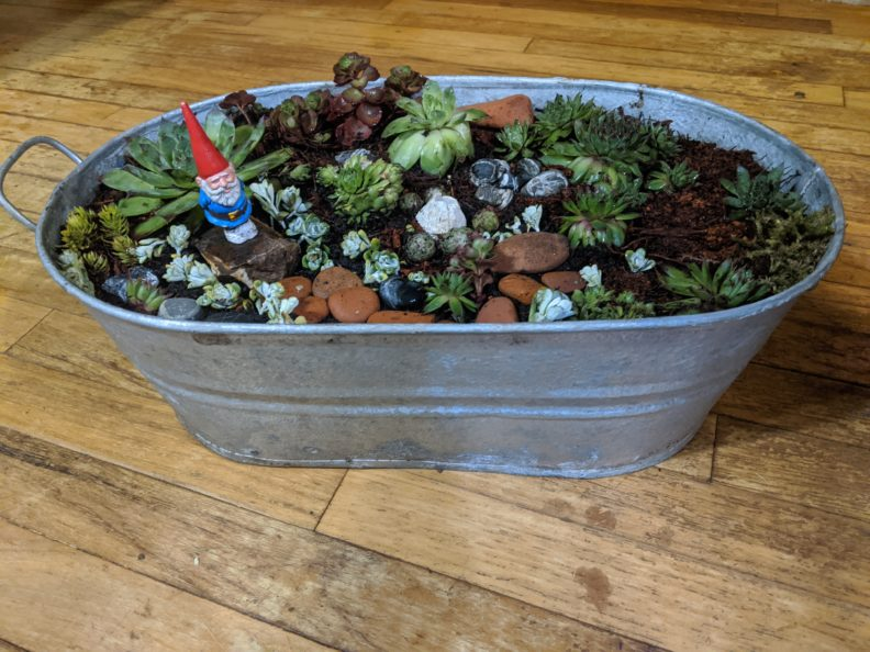 Metal planter with lots of different succulents, rocks and a bearded gnome wearing a red hat and blue jacket.