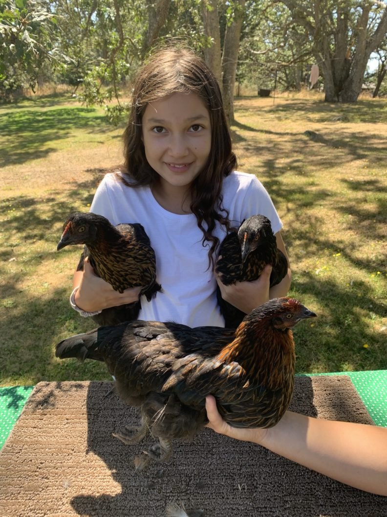 Girl holding three chickens.