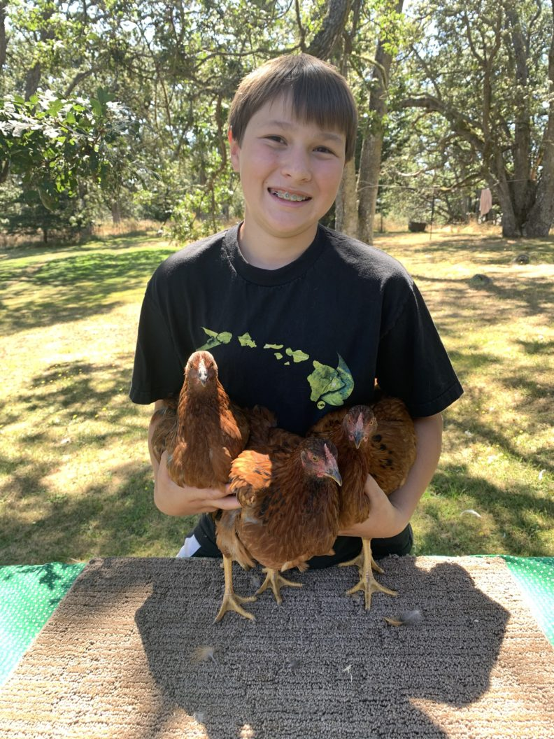 Younger boy holding three chickens