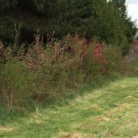 Hedgerow Picture