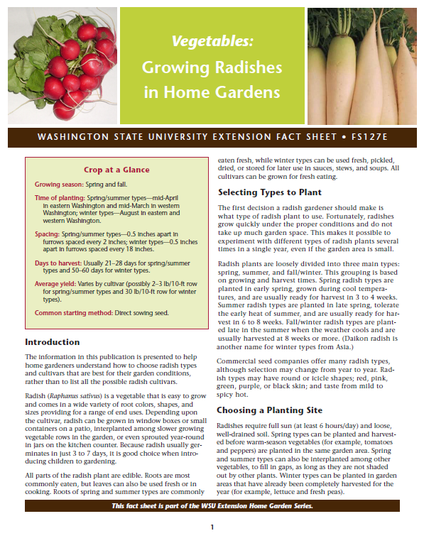 Growing Radishes in Home Gardens, FS127E