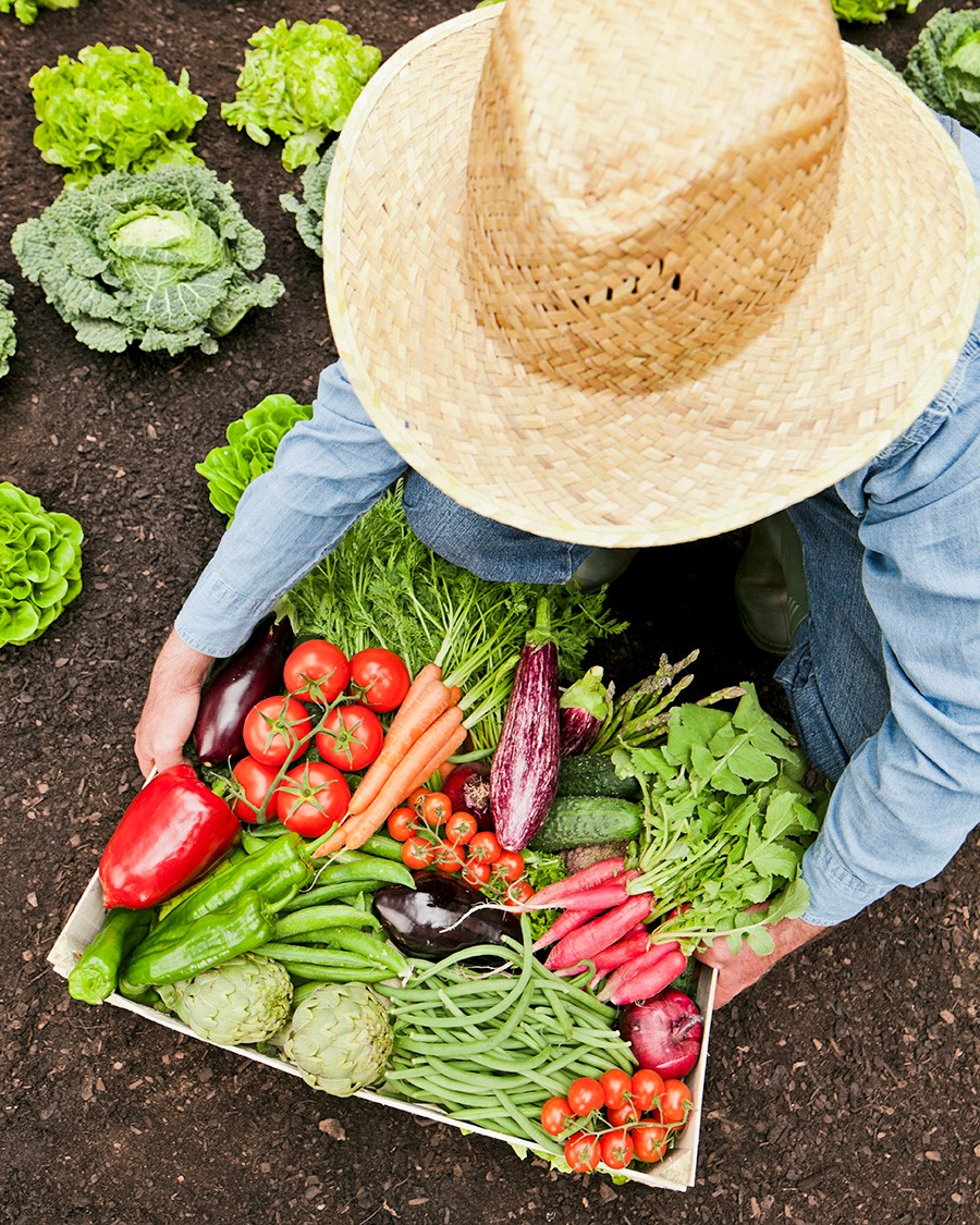 Assorted vegetables carried by a gardener in a straw hat