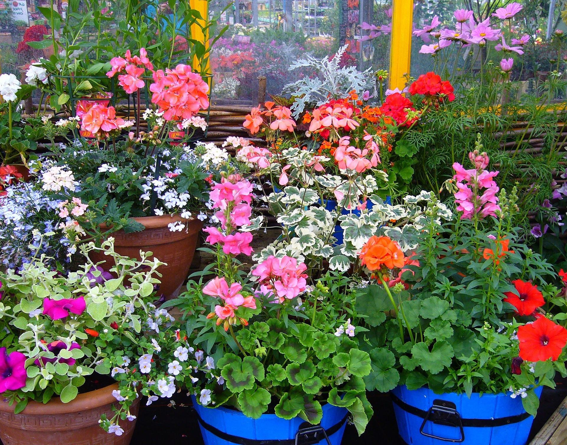 Flowering plants in pots