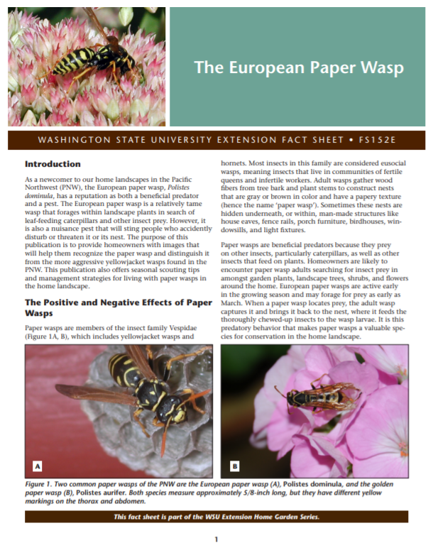 The European Paper Wasp (Home Gardening Series), FS152E brochure cover