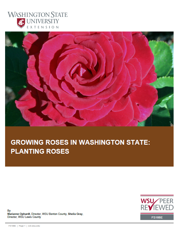 Growing Roses in Washington State-Planting Roses, FS166E brochure cover