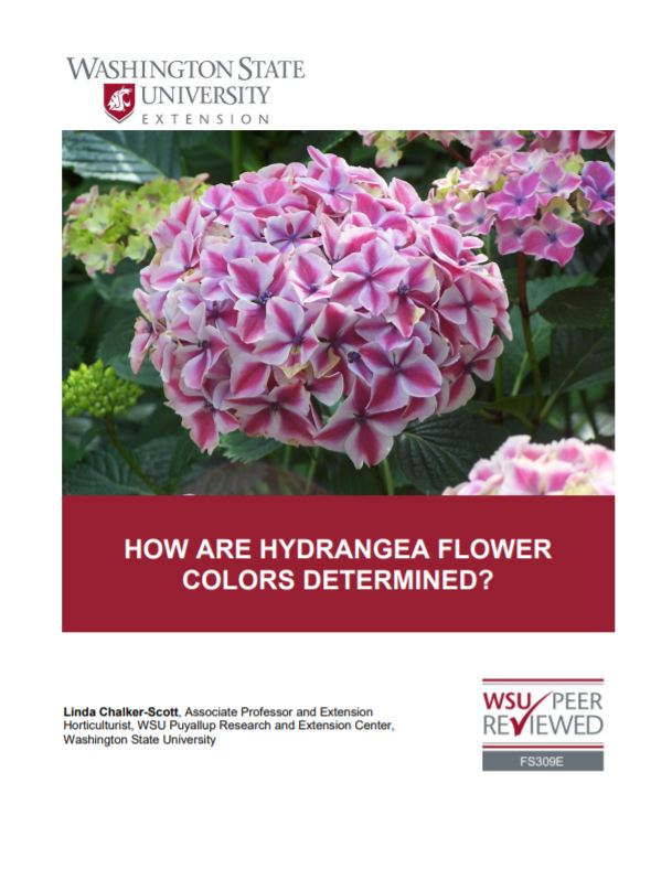How Are Hydrangea Flower Colors Determined, FS309E
