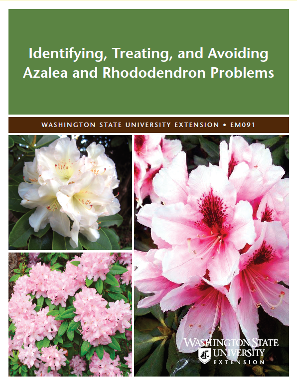 Identifying-Treating-and-Avoiding-Azalea-and-Rhododendron-Problems-EM091 brochure with pink rhododendrons in bloom on cover