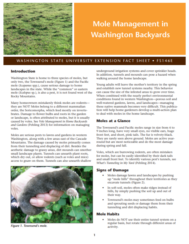 Mole Management in Washington Backyards (Home Garden Series), FS146E brochure cover