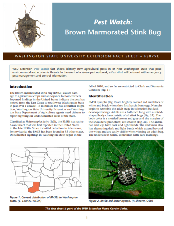 Pest Watch-Brown Marmorated Stink Bug (Home Garden Series), FS079E brochure cover