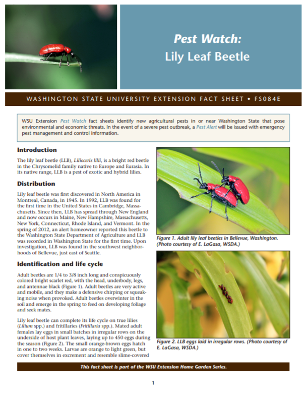 Pest Watch-Lily Leaf Beetle (Home Garden Series), FS084E brochure cover