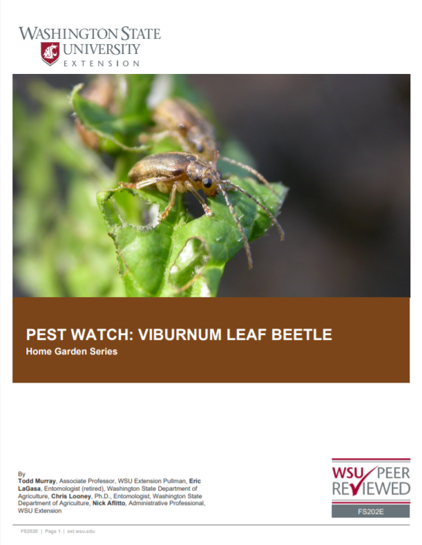 Pest Watch-Viburnum Leaf Beetle (Home Garden Series), FS202E brochure cover