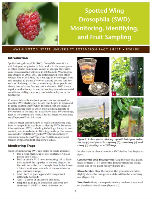 Spotted Wing Drosophila (SWD) Monitoring, Identifying, and Fruit Sampling, FS049E brochure cover