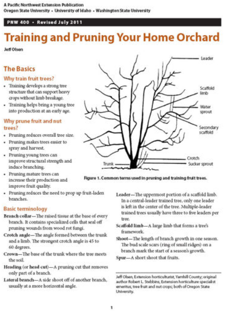 Training and Pruning Your Home Orchard, PNW400, $3 brochure cover with text and a line drawing of a tree