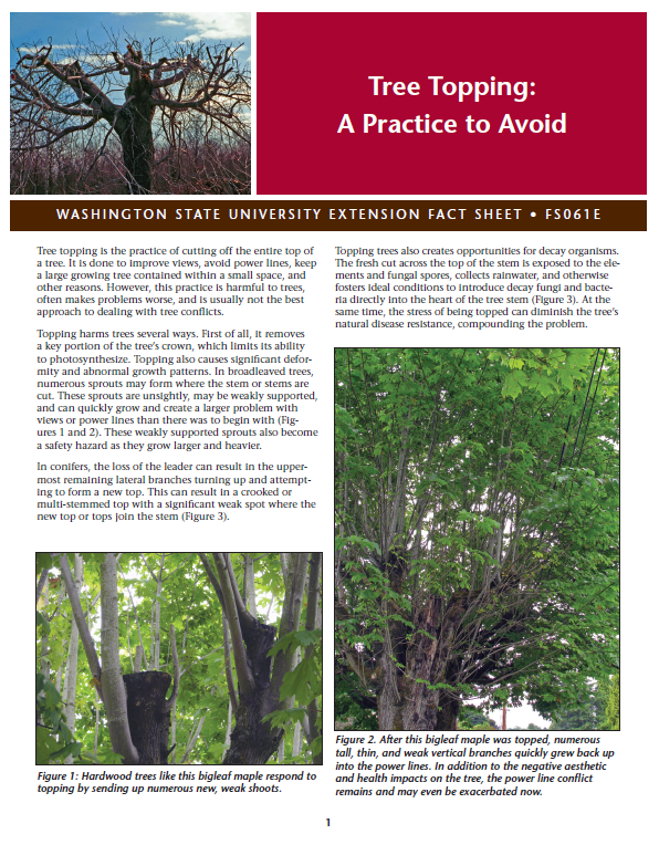 Tree-Topping-A-Practice-to-Avoid-FS061E brochure cover