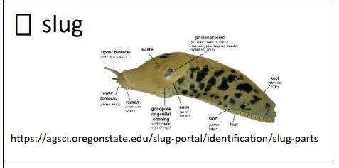 Green slug diagram identifying the parts of a slug