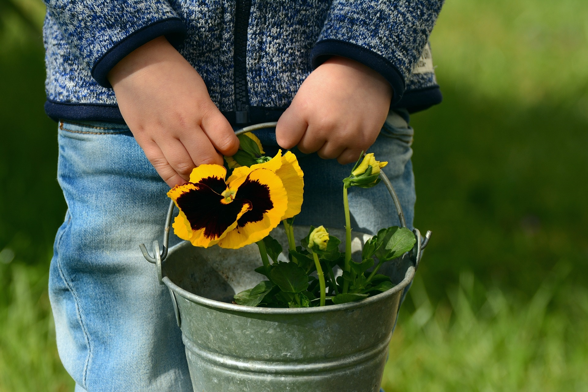 Child holding pail containing yellow flower