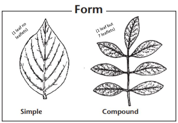 Simple and complex leaf forms